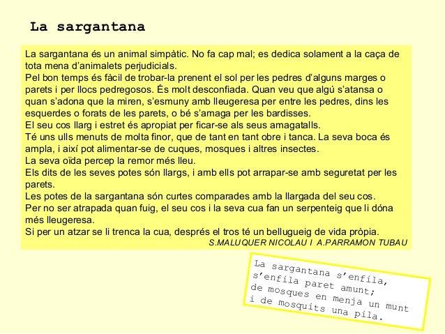 La sargantana La sargantana és un animal simpàtic. No fa cap mal; es dedica solament a la caça de tota mena d'animalets pe...