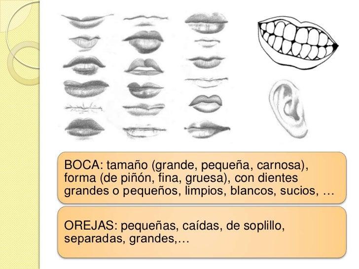 BOCA: tamaño (grande, pequeña, carnosa),forma (de piñón, fina, gruesa), con dientesgrandes o pequeños, limpios, blancos, s...