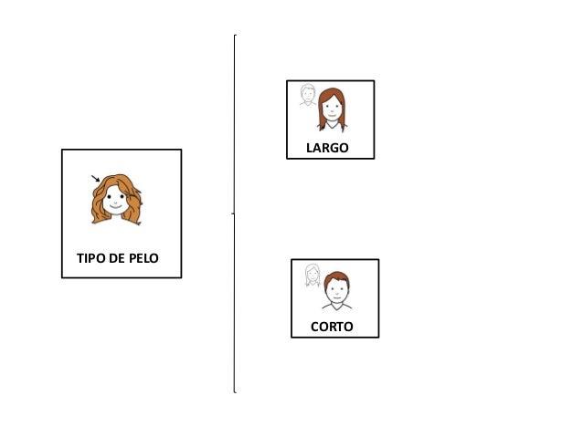 LARGO CORTO TIPO DE PELO