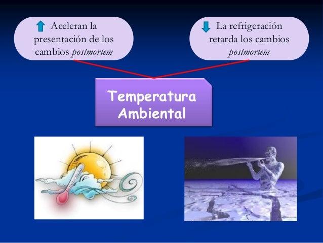 Aceleran la presentación de los cambios postmortem  Temperatura Ambiental  La refrigeración retarda los cambios postmortem