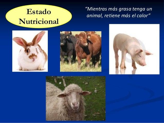 """Estado Nutricional  """"Mientras más grasa tenga un animal, retiene más el calor"""""""
