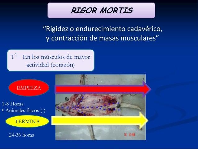 """IMBIBICIÓN POR HEMOGLOBINA """"Es el resultado de la hemólisis intravascular, por la cual es liberada la hemoglobina la cual ..."""
