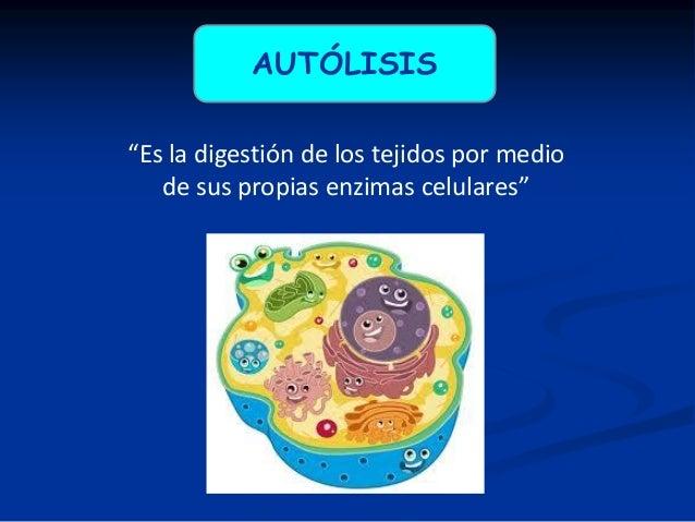 PUTREFACCIÓN Degradación de los tejidos por toxinas bacterianas. Las bacterias se multiplican y sus toxinas y enzimas desi...