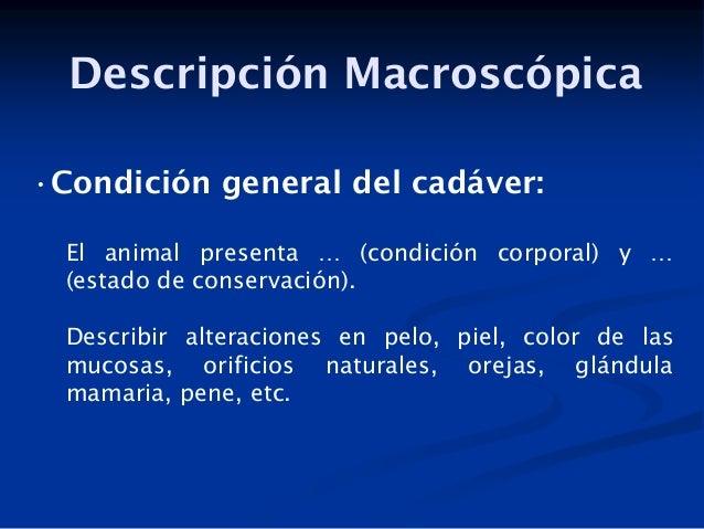 Descripción Macroscópica •Condición general del cadáver: El animal presenta … (condición corporal) y … (estado de conserva...