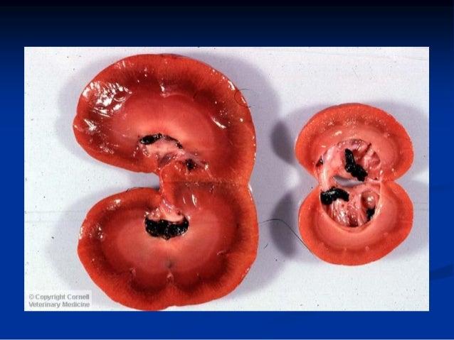 TIPOS DE DIAGNÓSTICO Diagnóstico Presuntivo Diagnóstico Clínico Diagnóstico de Laboratorio Diagnóstico Morfológico Diagnós...