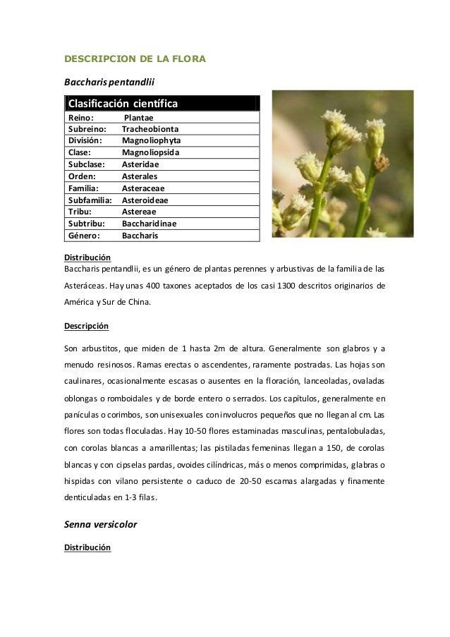 DESCRIPCION DE LA FLORA Baccharispentandlii Clasificación científica Reino: Plantae Subreino: Tracheobionta División: Magn...