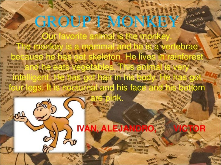 GROUP 1 MONKEY          Our favorite animal is the monkey.  The monkey is a mammal and he is a vertebrae because he has go...