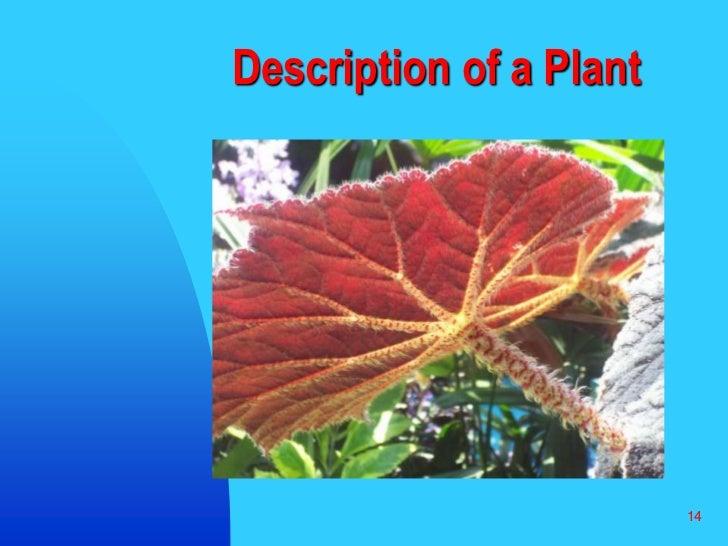 14<br />Description of a Plant<br />