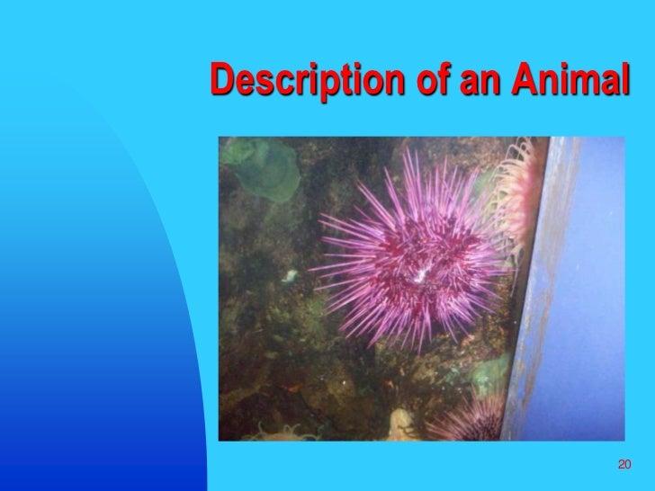 20<br />Description of an Animal<br />