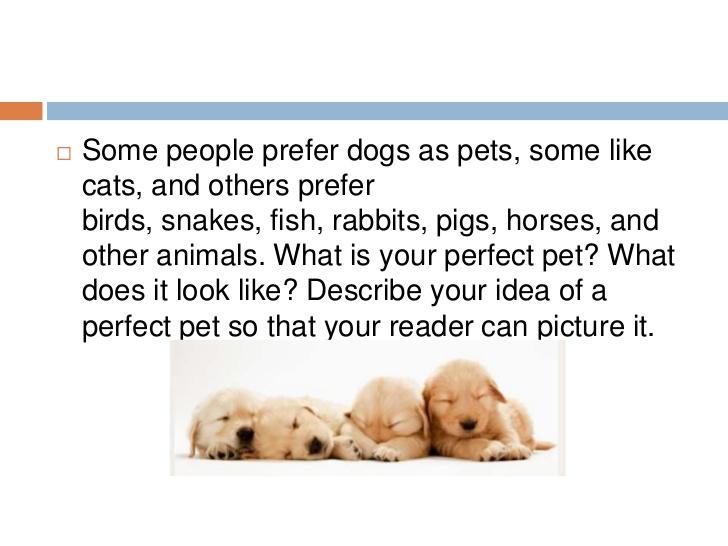 Descriptive essay on my pet dog