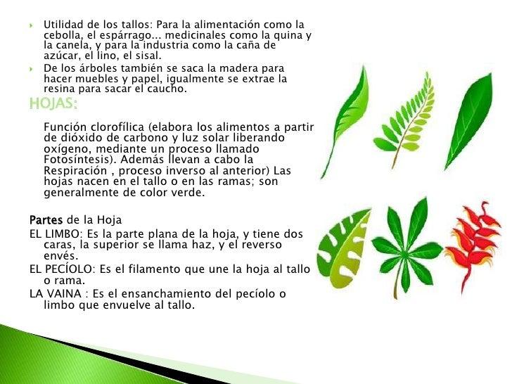 Descubriendo todo lo relacionado con las plantas - Todo sobre las plantas ...