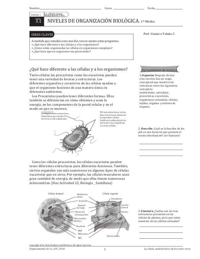 Niveles de organización biológica. Guía para 1º Medio Educación Chile…