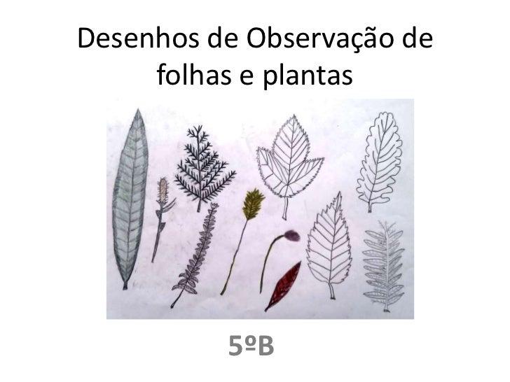 Desenhos de Observação de folhas e plantas<br />5ºB<br />