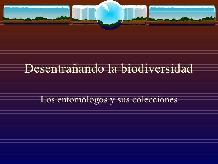Desentrañando la biodiversidad Los entomólogos y sus colecciones