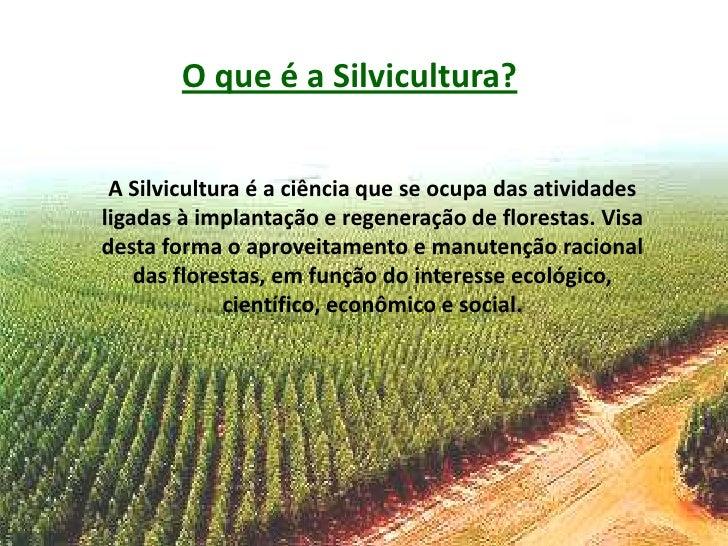 Resultado de imagem para Imagens silvicultura