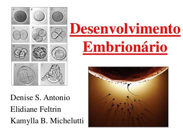 Desenvolvimento                 EmbrionárioDenise S. AntonioElidiane FeltrinKamylla B. Michelutti