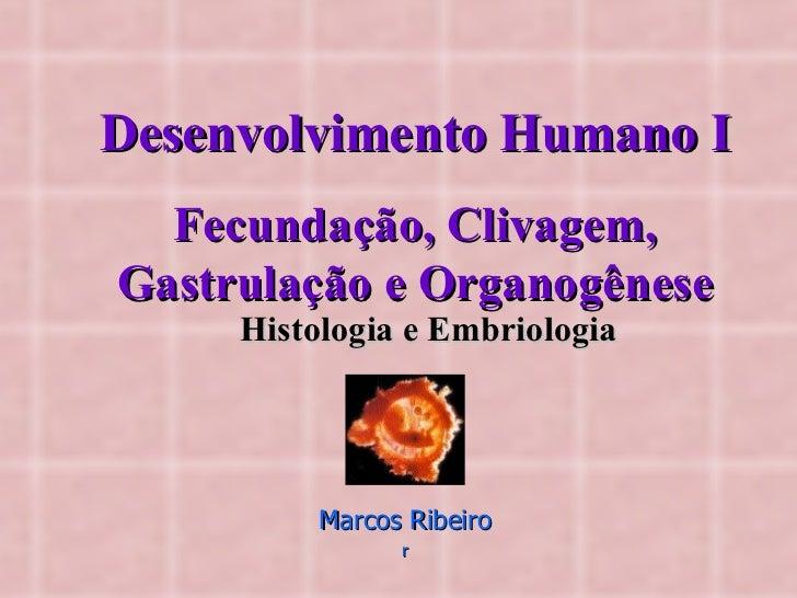 Desenvolvimento Humano I Fecundação, Clivagem, Gastrulação e Organogênese Histologia e Embriologia Marcos Ribeiro r