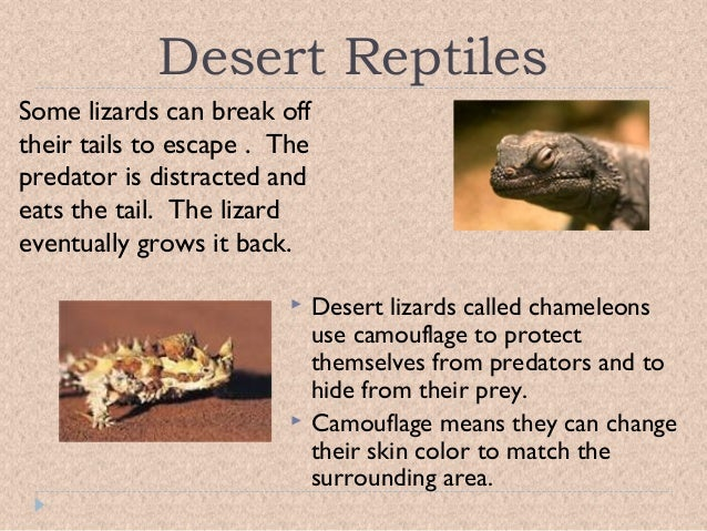 Adaptive features of desert plants and animals