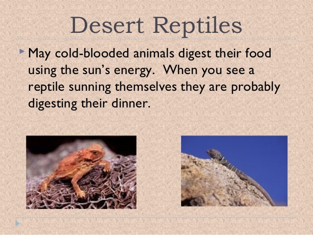 adaptive features of animals in desert Desert: plants short grasses and the spiniflex is associated with the australian desert plant adaptations because of animals | plants biomes.