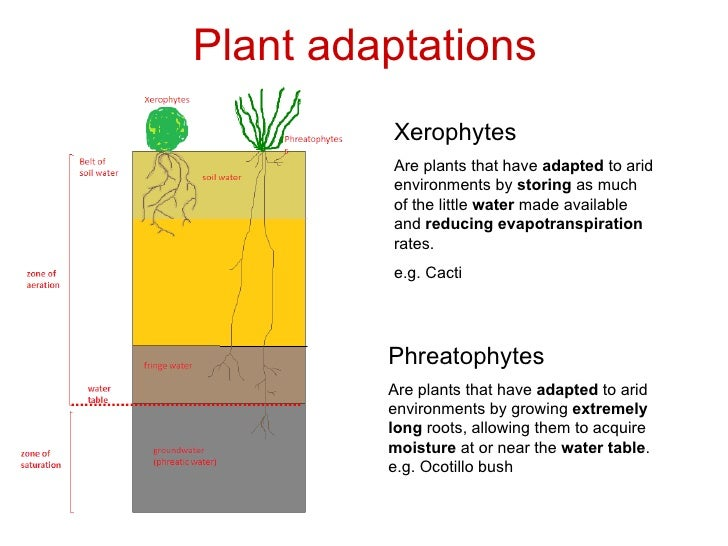 adaptive features of plants in desert What are the adaptive features of a cactus plants are adapted to the hot climates of the deserts of north and what are the adaptive features of lotus plant.