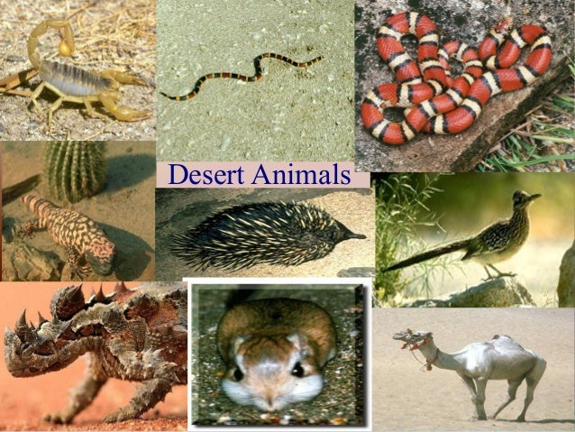 An overview of the desert biome and the species in it