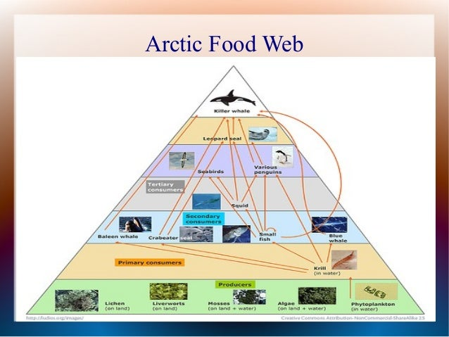 Essay about sea food chain