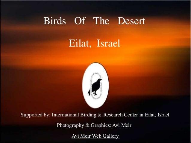 Birds Of The Desert                      Eilat, IsraelSupported by: International Birding & Research Center in Eilat, Isra...