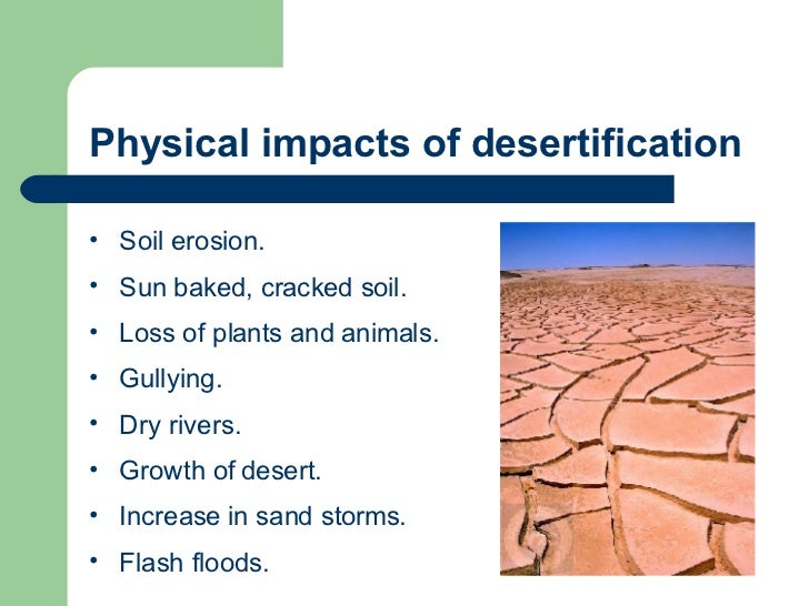 effects of desertification Desertification causes a high-risk of crop failure, low economic returns on crops, a build-up of salt in the soil and the accidental burning of semiarid vegetation.