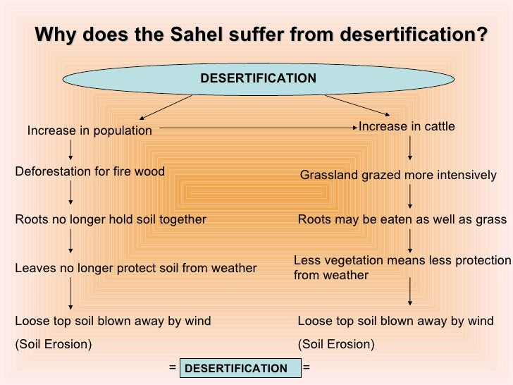 Buy Essays Papers Discuss The Causes Of Desertification Essay Term Paper Academic Paper Essay Writing also English Essay Short Story Desertification Causes And Effects Essay  Mistyhamel Example Of A Essay Paper