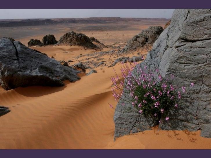 Desert magique Slide 3