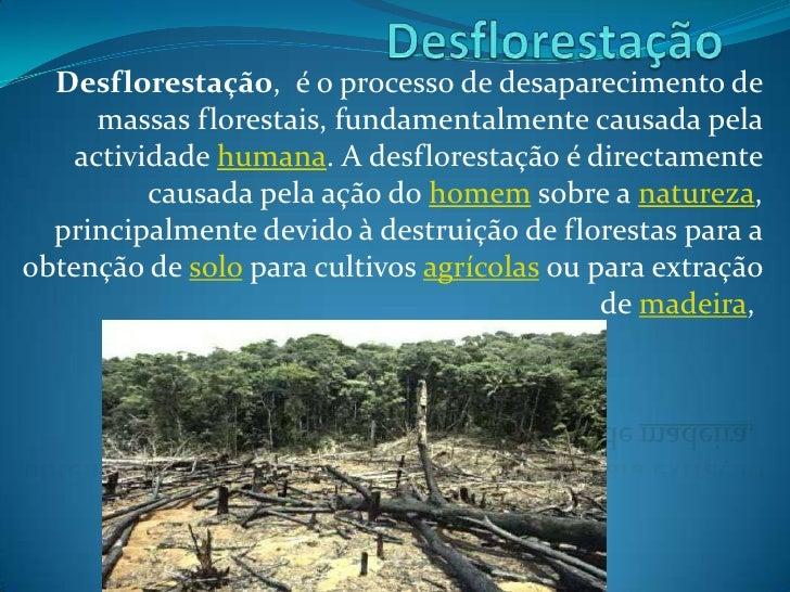 Desflorestação, é o processo de desaparecimento de      massas florestais, fundamentalmente causada pela    actividade hum...