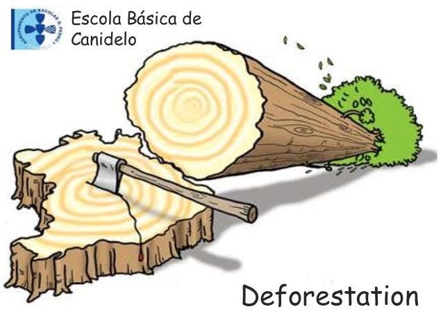 Deforestation Escola Básica de Canidelo