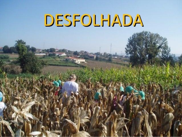 DDEESSFFOOLLHHAADDAA