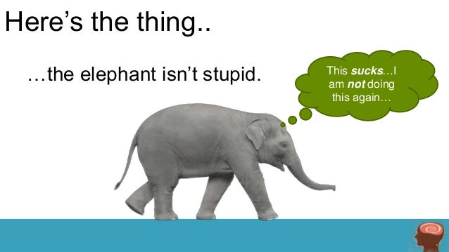 Here's the thing.. …the elephant isn't stupid.  This sucks…I am not doing this again…