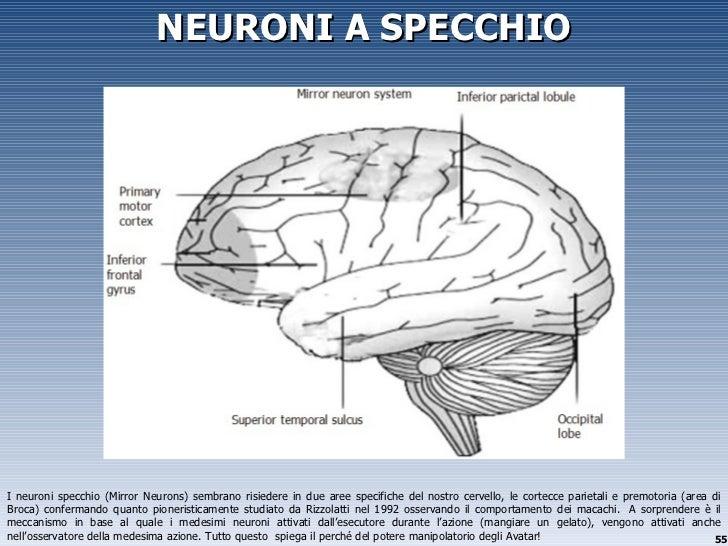 Gamification design for pleasure - Neuroni a specchio ...