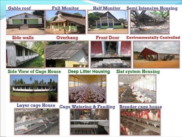Design of poultry houses for Types of houses with names