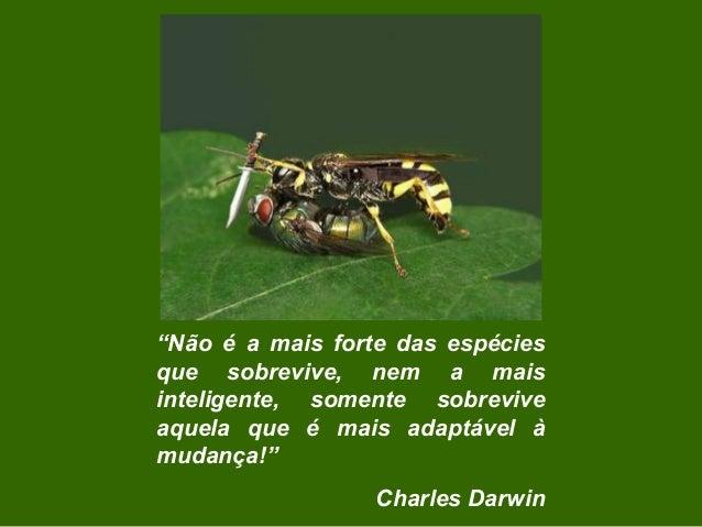 """""""Não é a mais forte das espécies que sobrevive, nem a mais inteligente, somente sobrevive aquela que é mais adaptável à mu..."""