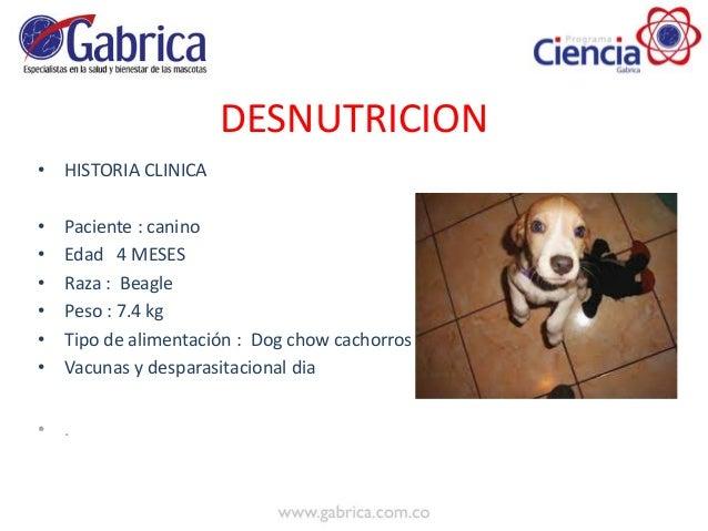 Desnutricion erlicanis Slide 2