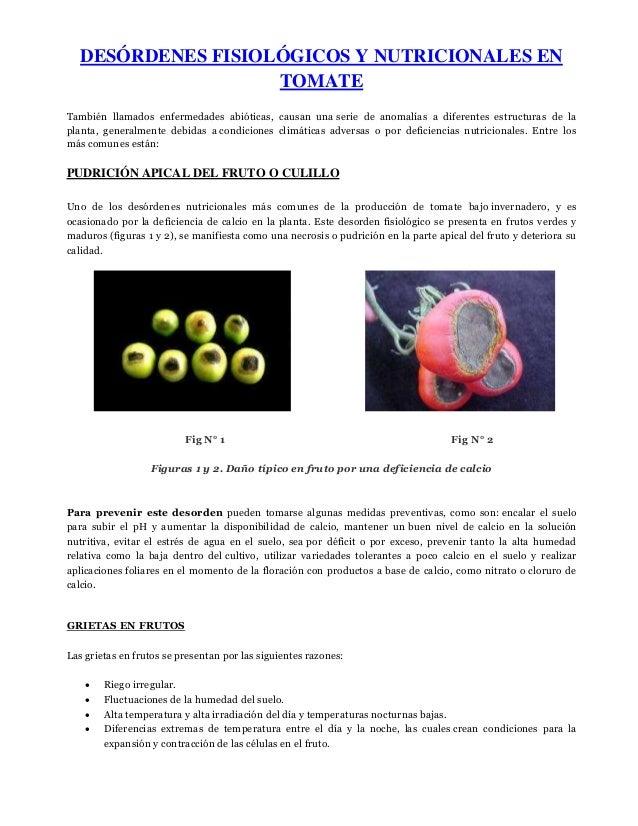 DESÓRDENES FISIOLÓGICOS Y NUTRICIONALES EN TOMATE También llamados enfermedades abióticas, causan una serie de anomalías a...