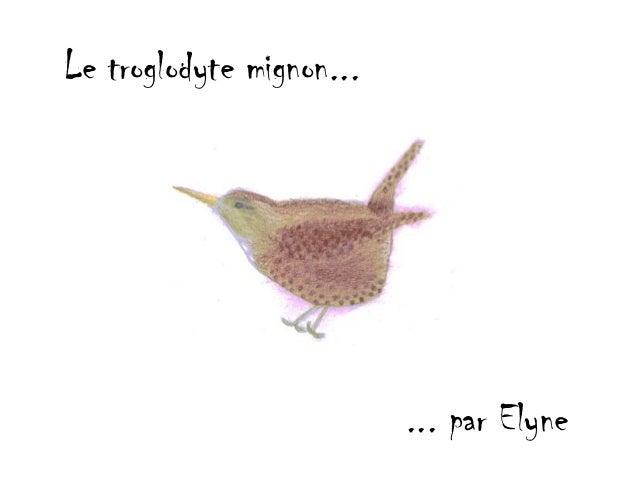 Le troglodyte mignon...                          ... par Elyne