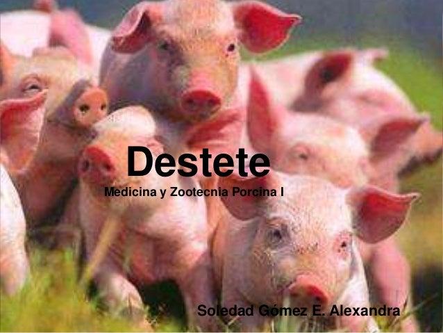 Destete Medicina y Zootecnia Porcina I  Soledad Gómez E. Alexandra