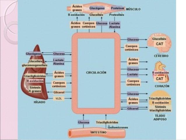Destino metabólico de los hidratos de carbono