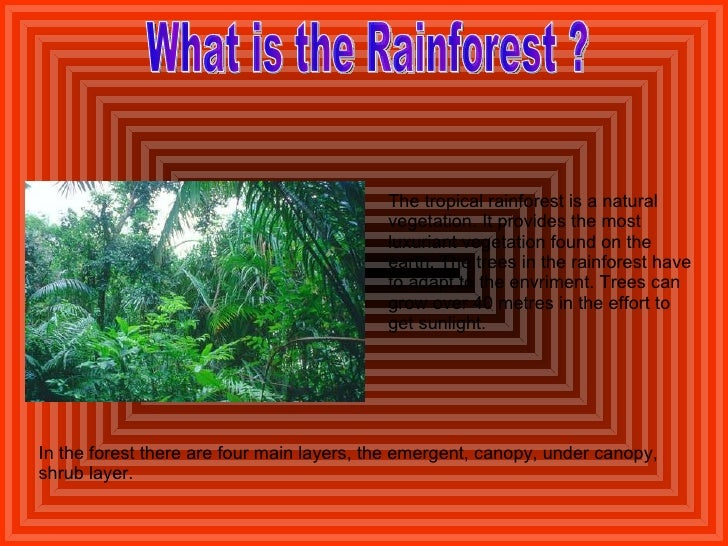 What is the Rainforest ? The tropical rainforest is a natural vegetation. It provides the most luxuriant vegetation found ...