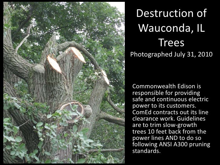 Destruction of Wauconda, IL TreesPhotographed July 31, 2010<br />Commonwealth Edison is responsible for providing safe and...