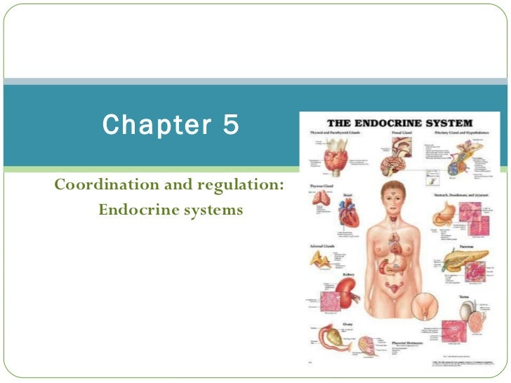 Coordination and regulation:  Endocrine systems Chapter 5