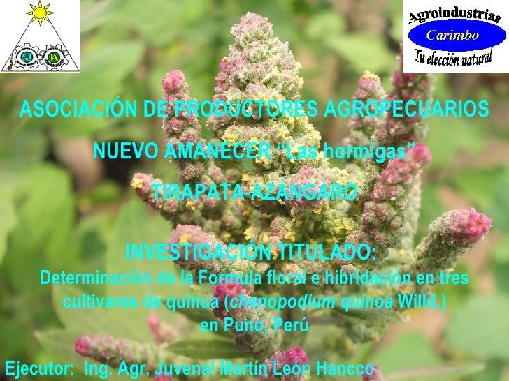 "ASOCIACIÓN DE PRODUCTORES AGROPECUARIOS NUEVO AMANECER ""Las hormigas"" TIRAPATA-AZÁNGARO INVESTIGACIÓN TITULADO:   Determin..."