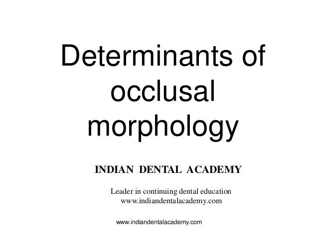 Determinants of occlusal morphology INDIAN DENTAL ACADEMY Leader in continuing dental education www.indiandentalacademy.co...