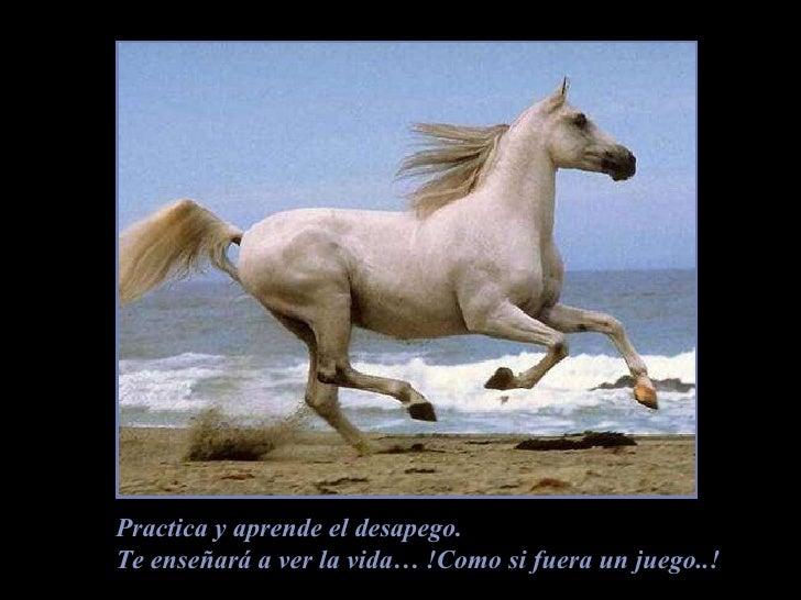 Practica y aprende el desapego. Te enseñará a ver la vida… !Como si fuera un juego..!