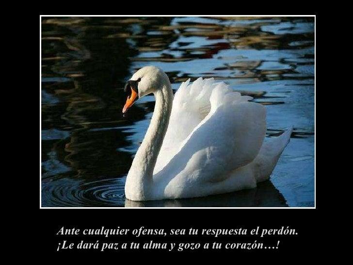 Ante cualquier ofensa, sea tu respuesta el perdón. ¡Le dará paz a tu alma y gozo a tu corazón…!