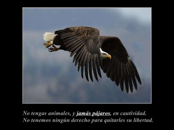 No tengas animales, y  jamás pájaros , en cautividad. No tenemos ningún derecho para quitarles su libertad.